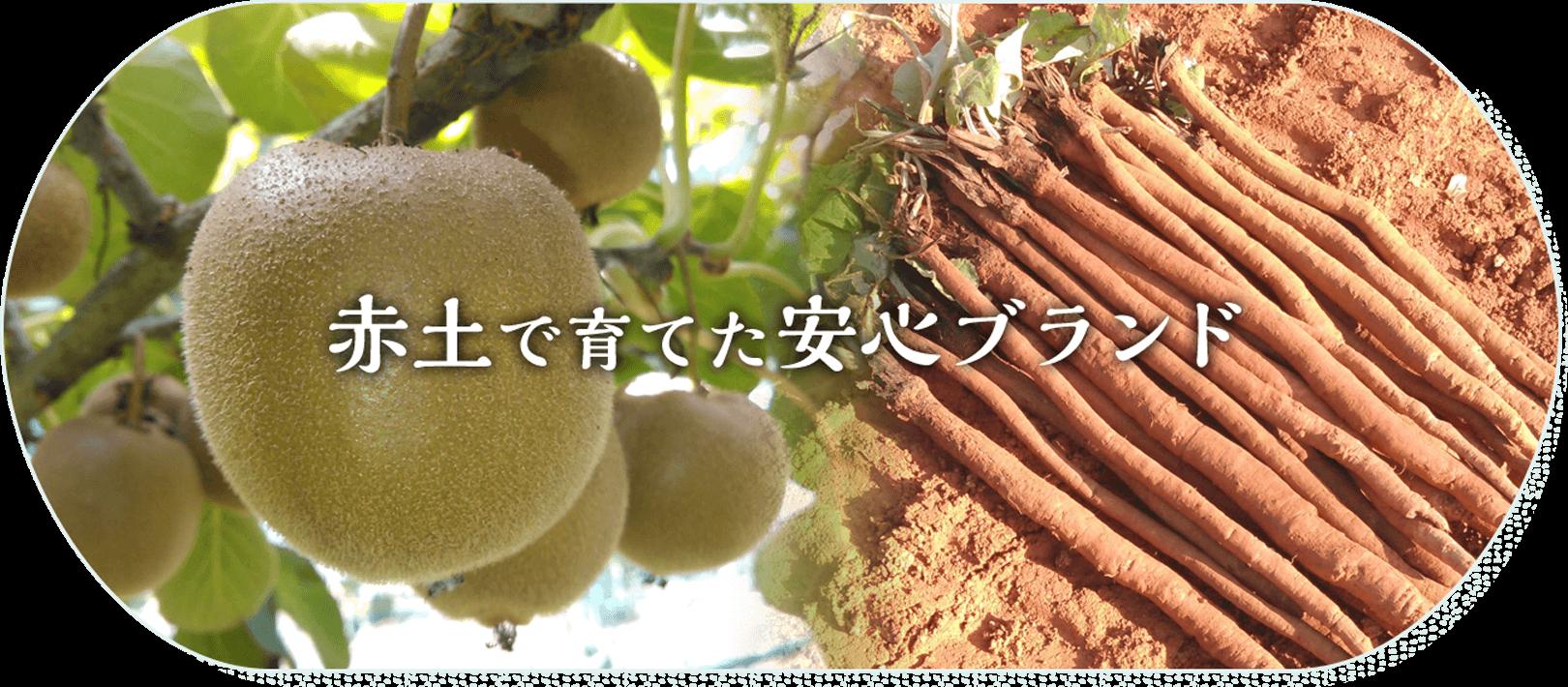 農薬を使わない「伝統農法」